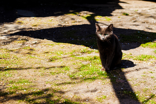 mysterious black cat in the shadows ominously looks