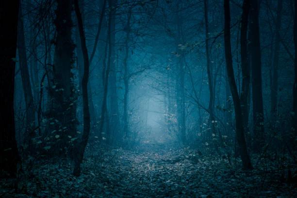 tajemnicza, niebiesko-stonowana leśna ścieżka. chodnik w ciemnym, mglistym, jesiennym, zimnym lesie wśród wysokich drzew. - upiorny zdjęcia i obrazy z banku zdjęć