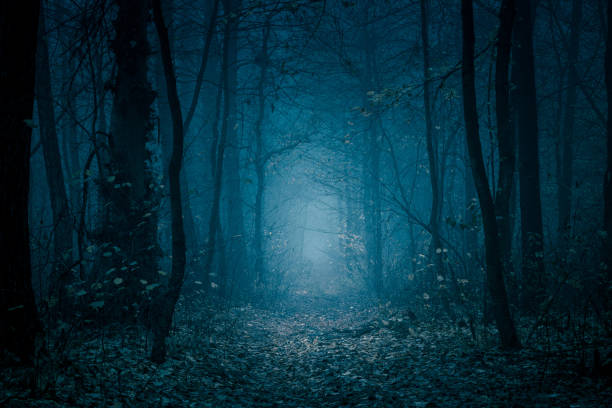 mysterious, blue-toned forest pathway. footpath in the dark, foggy, autumnal, cold forest among high trees. - orrore foto e immagini stock