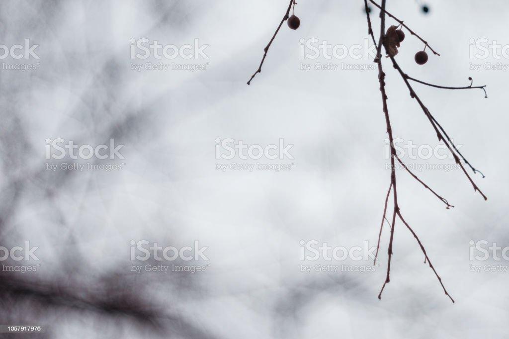 Misteriosos ramos da árvore morta Linden com vagens da semente em dia nebuloso com cópia espaço - foto de acervo
