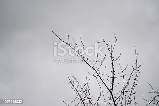 istock Mysterious Branches Of Dead Tree With Seed Pods On Foggy Day Against Moody Sky 1057918032