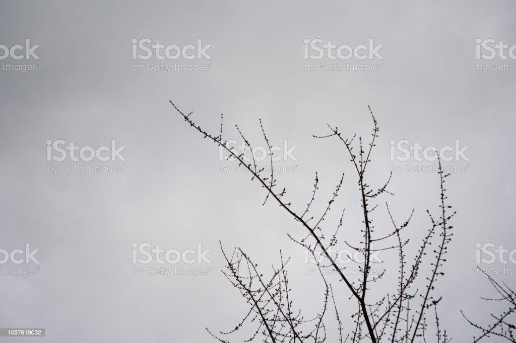 Misteriosos ramos da árvore morta, com vagens da semente em dia nebuloso contra céu mal-humorado - foto de acervo