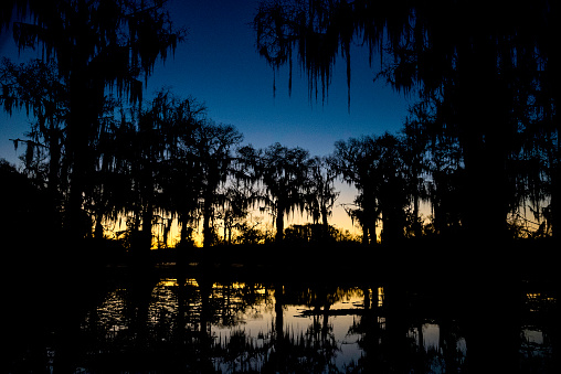 Silhouetted cypress trees with Spanish moss hanging from branches, Caddo Lake, TX, USA