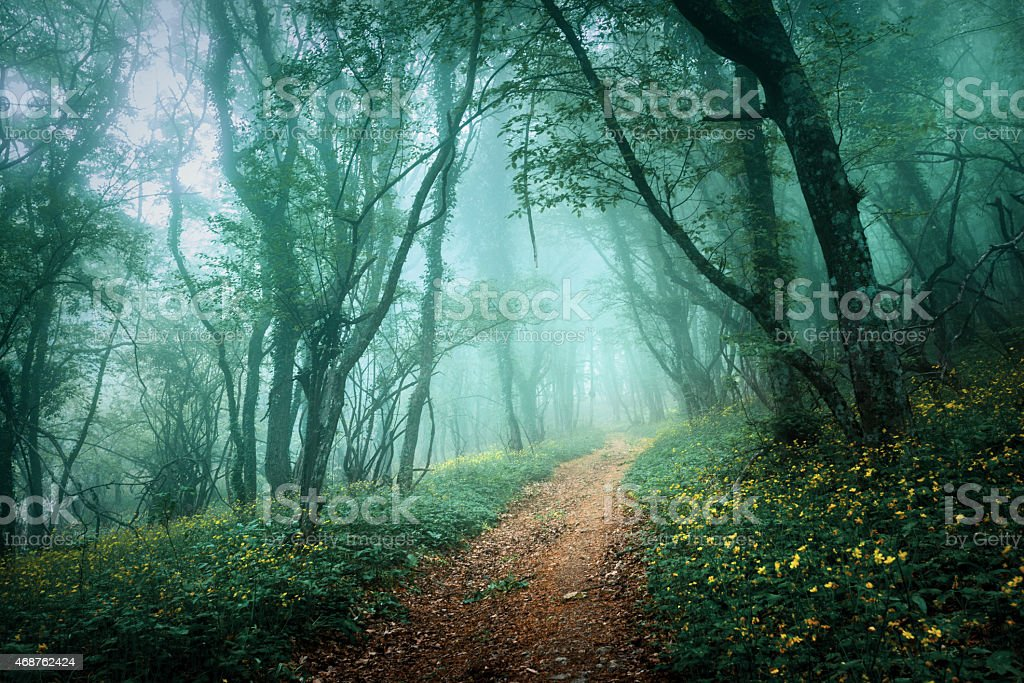 Mysterious dark forest in fog with road and flowers stock photo