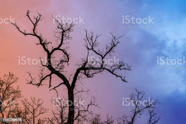 Photo of Mysterious dramatic landscape in cold tones - silhouettes of the bare tree branches against color toned cloudy sky