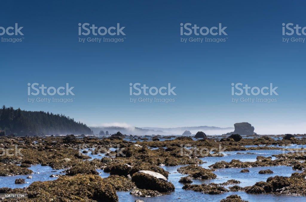 Mysterious Fog on Ozette Beach, Olympic Peninsula stock photo