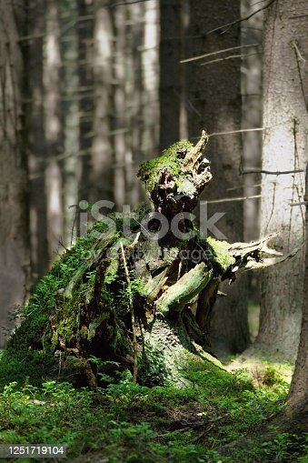 Mysterious forest ghost - natural wooden sculpture in the forest