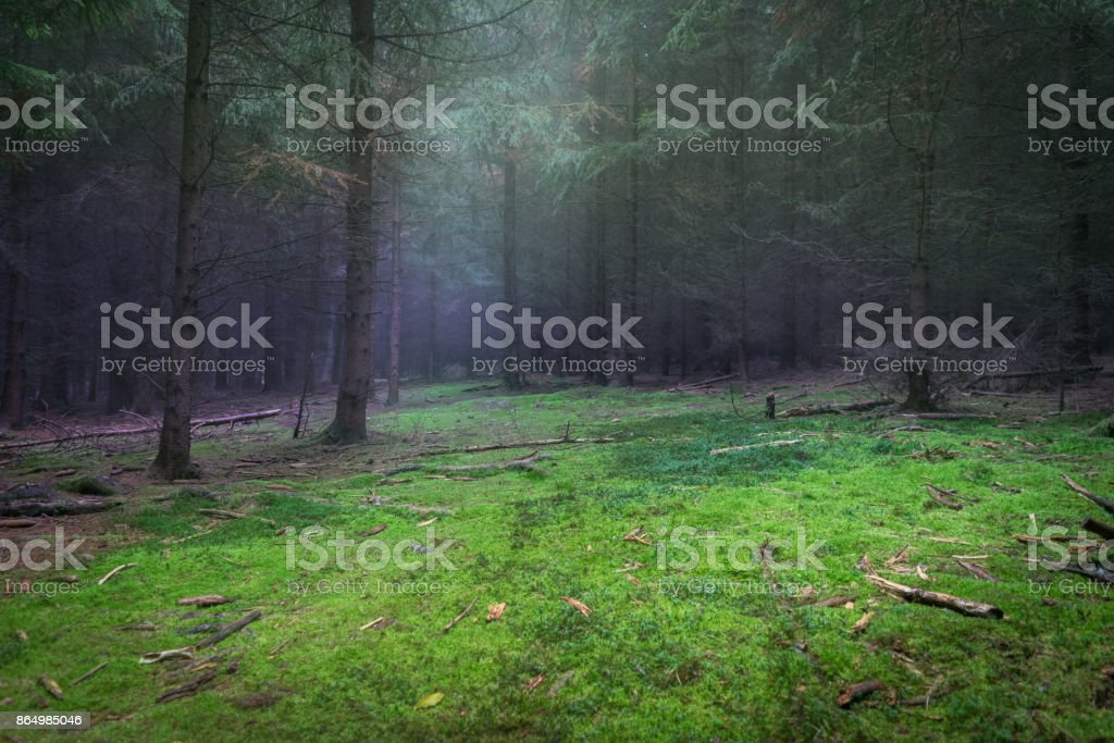 Mysterious forest glade with moss and spooky trees stock photo