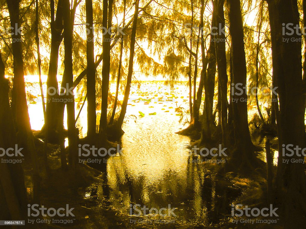 Mysterious forest in fog royalty-free stock photo