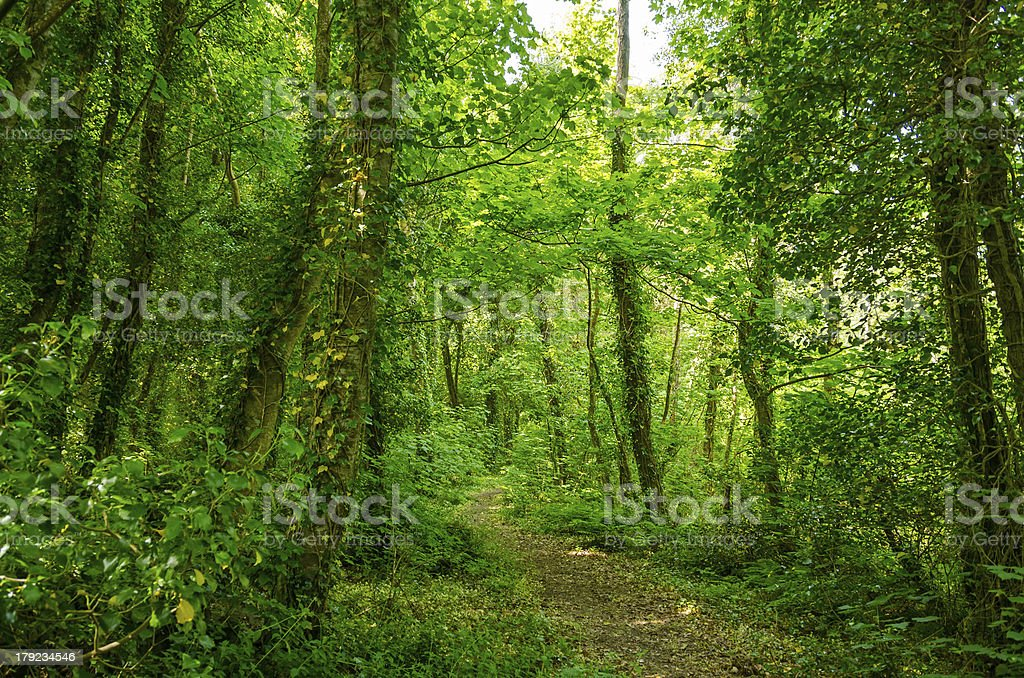 Mysterious forest, Inchagoill island, lake Corrib royalty-free stock photo