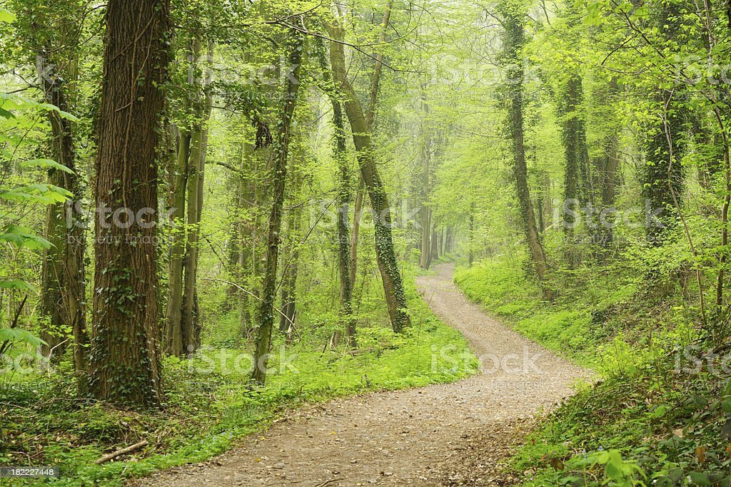 Mysterious forest path stock photo