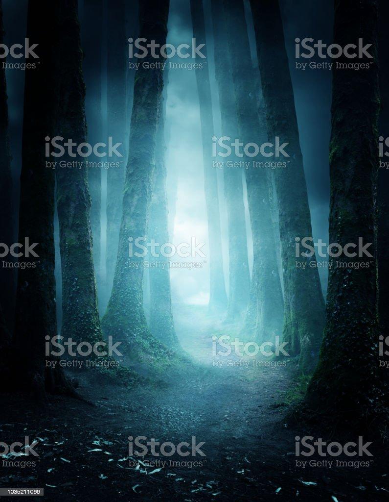 Geheimnisvolle Waldweg – Foto