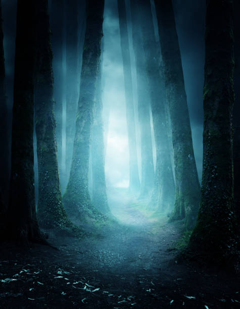 Mysterious Forest Pathway A dark and moody forest at night with a pathway leading through it. Photo composite. forest stock pictures, royalty-free photos & images