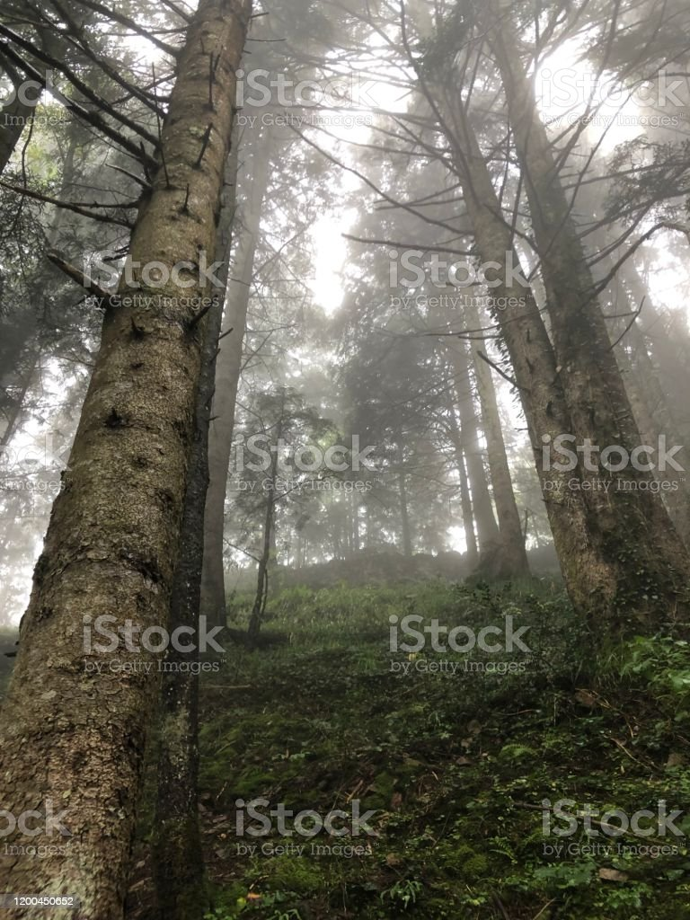 Mysterious Forest Powerful lightning in a foggy weather. Forest in Turkey. Green combinations of the nature. Backgrounds Stock Photo
