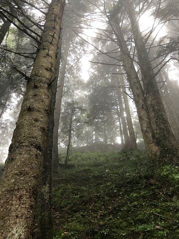 Mysterious Forest Stock Photo - Download Image Now