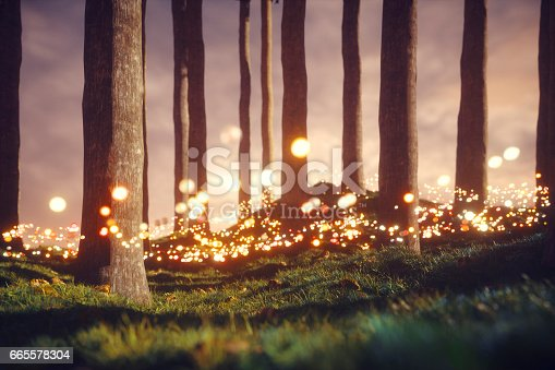 Mysterious forest with glowing orbs.