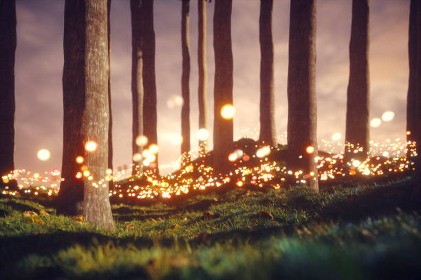 Mysterious forest with glowing orbs stock photo