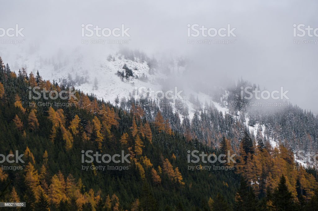 Mysterious late autumn/winter scenery with larch forest and mountain ridge engulfed by mist stock photo