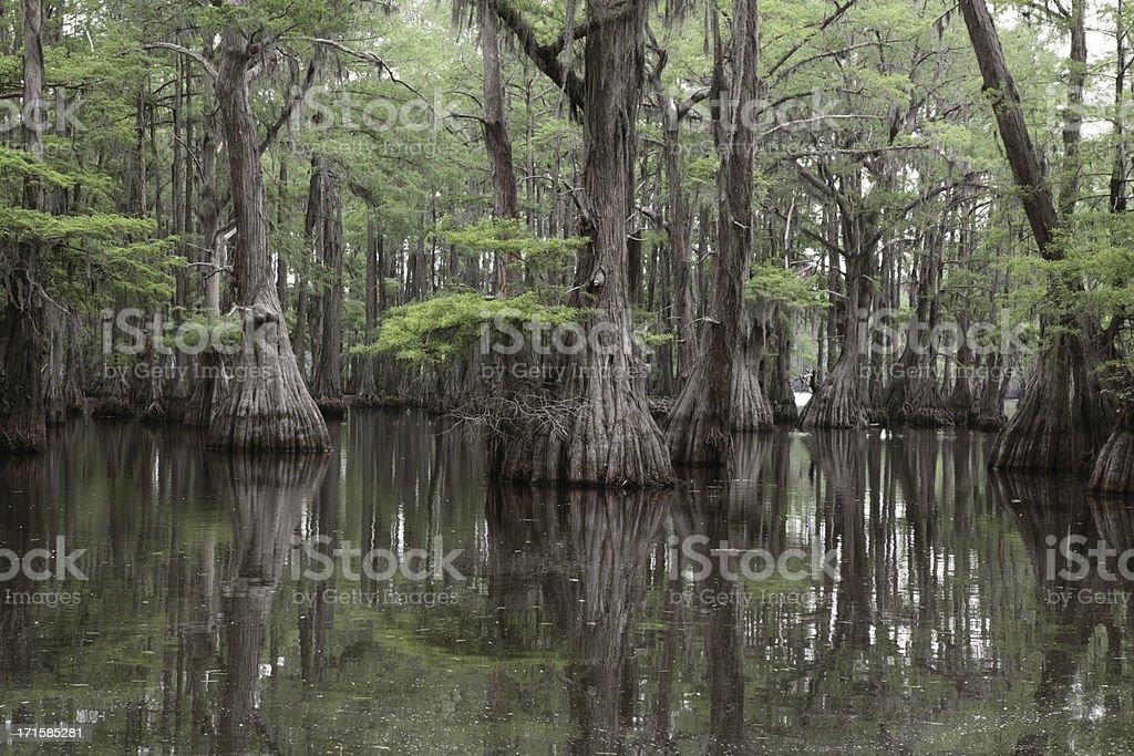 Mysterious Louisiana Swamp stock photo