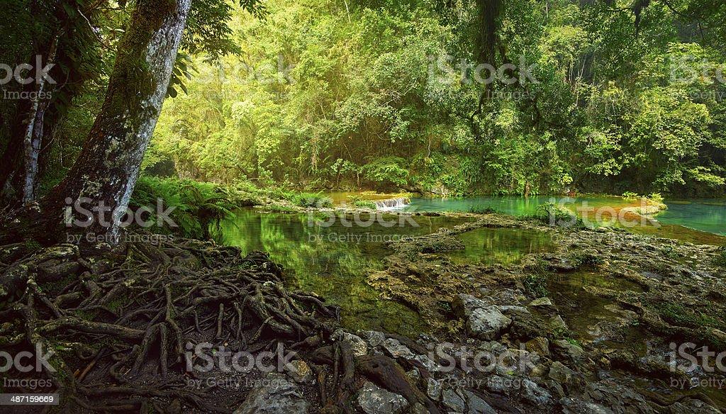 Mysterious Mayan jungle in national park Semuc Champey Guatemala stock photo