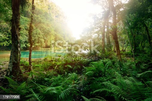 Mysterious Mayan jungle in the national park Semuc Champey Guatemala.