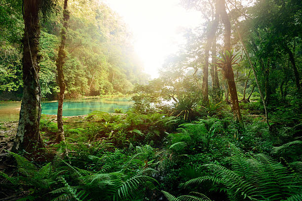 Mysterious Mayan jungle in the national park Semuc Champey Guate stock photo