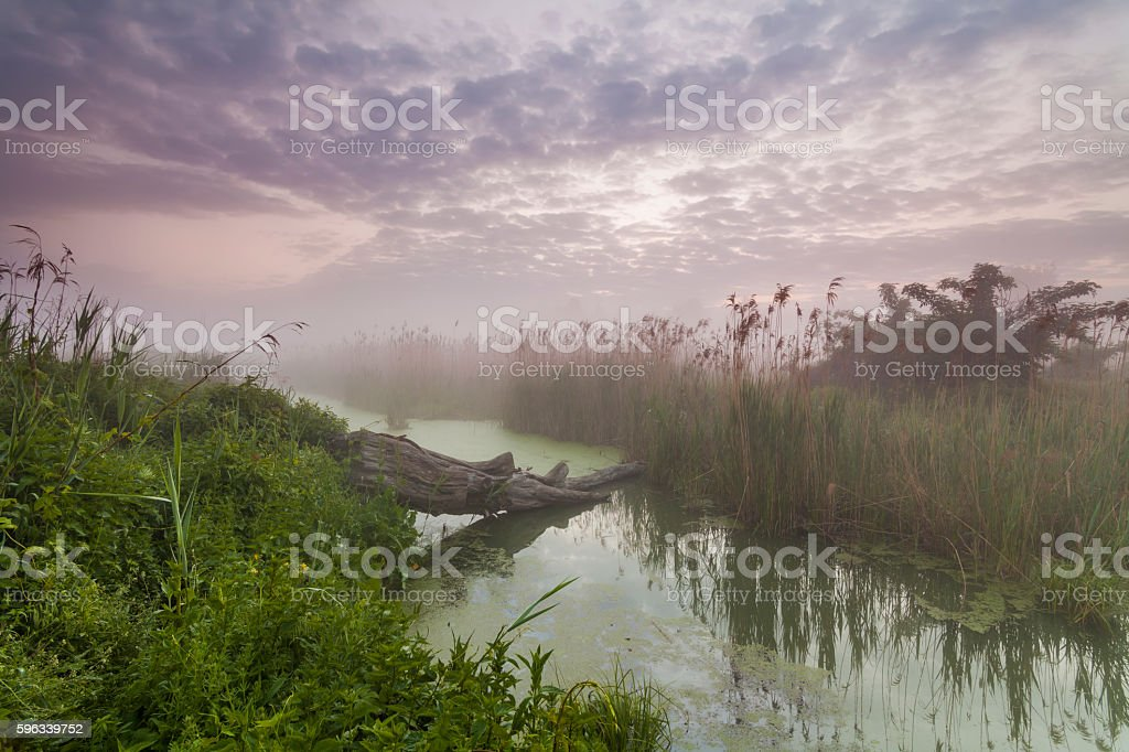 Mysterious misty dawn at the small river. royalty-free stock photo