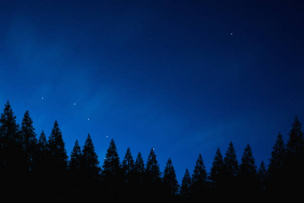 Mysterious night sky above the coniferous forest Wonderful view of mysterious night sky above the coniferous forest big dipper constellation stock pictures, royalty-free photos & images