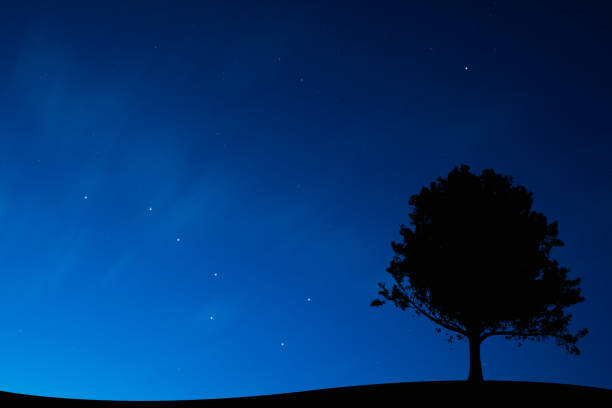 Mysterious night sky Lonely tree under the stellar sky big dipper constellation stock pictures, royalty-free photos & images