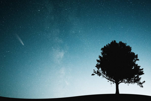 Mysterious night sky Lonely tree under the stellar sky north star stock pictures, royalty-free photos & images