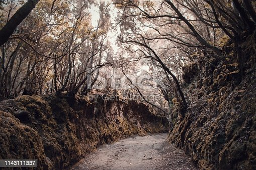 Mysterious path in the creepy dark forest, Tenerife Spain