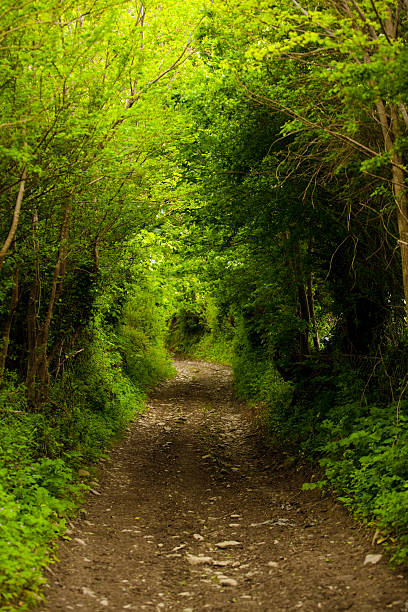 Mysterious Path into the Forest stock photo