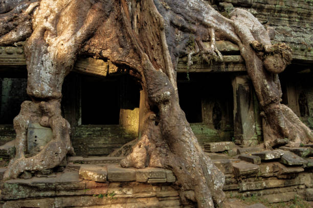Mysterious Preah Khan temple in Angkor, Siem Reap, Cambodia. stock photo
