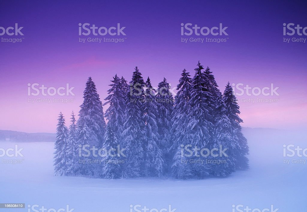 Mysterious small winter forest under dramatic sunset sky royalty-free stock photo