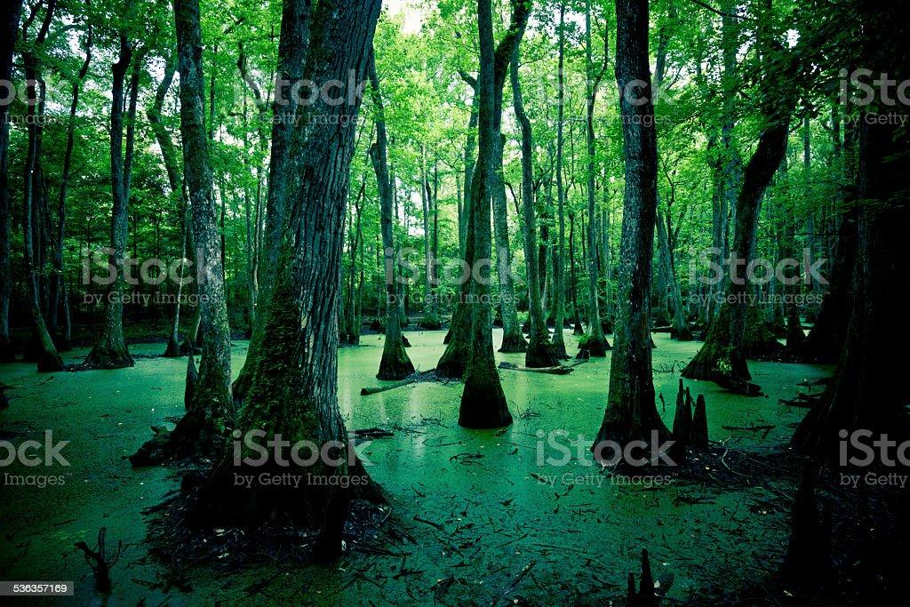 Mysterious Spooky Swamps in Louisiana, USA stock photo