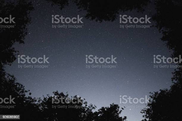 Photo of Mysterious starry sky over the deciduous forest