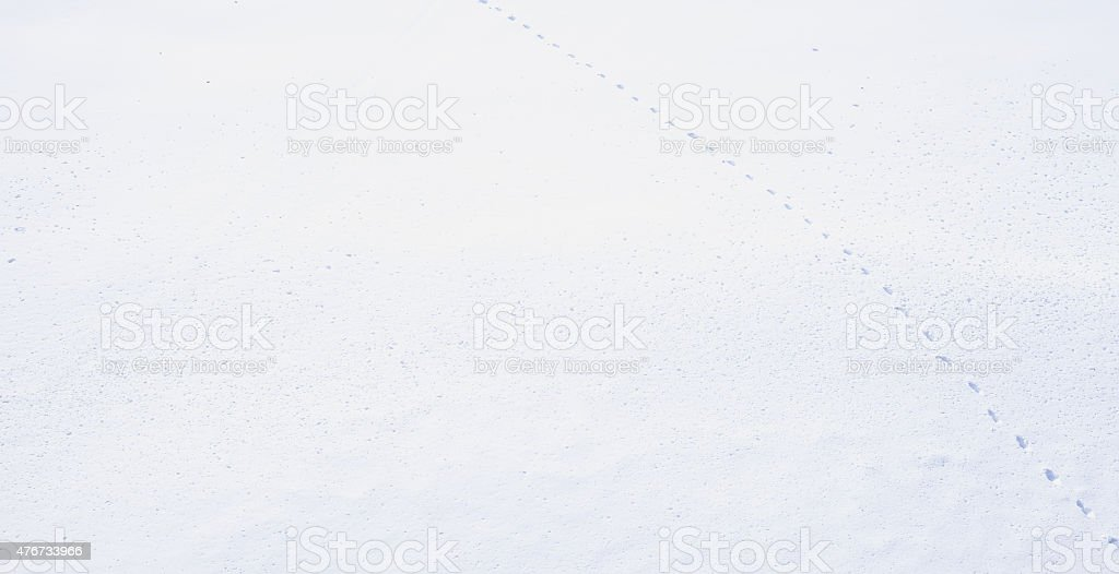 Mysterious trail in snow at Japan stock photo