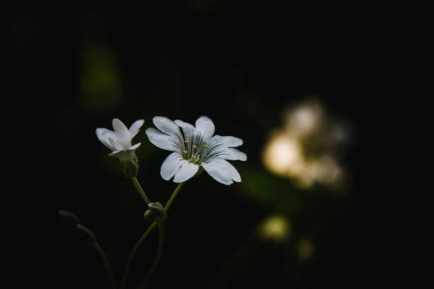 Tajemniczy biały kwiat – zdjęcie