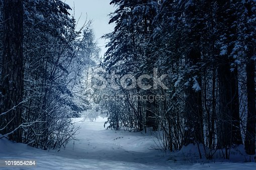 Mysterious winter forest in dark forest.