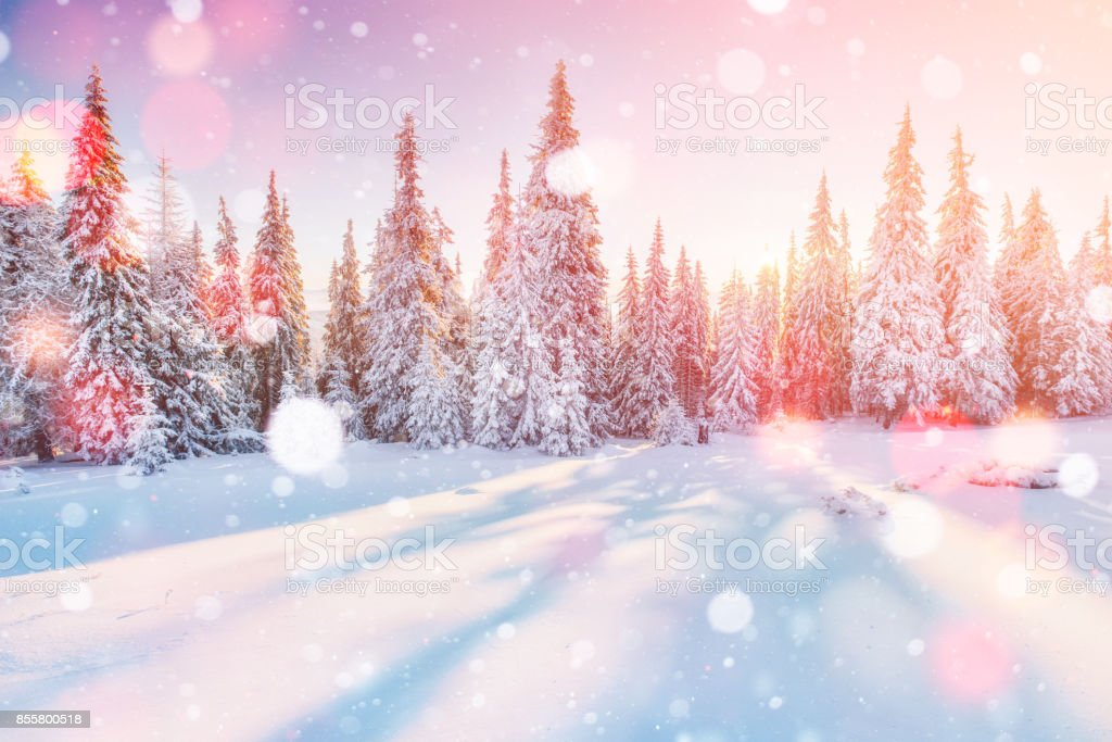 Mysterious winter landscape majestic mountains in winter. Magical winter snow covered tree. Photo greeting card. Bokeh light effect, soft filter stock photo