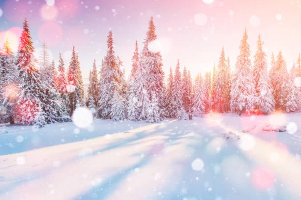 Inverno misteriosa paisagem majestosas montanhas no inverno. Árvore coberta de neve de inverno mágico. Cartão fotográfico. Efeito de luz bokeh, filtro macio - foto de acervo