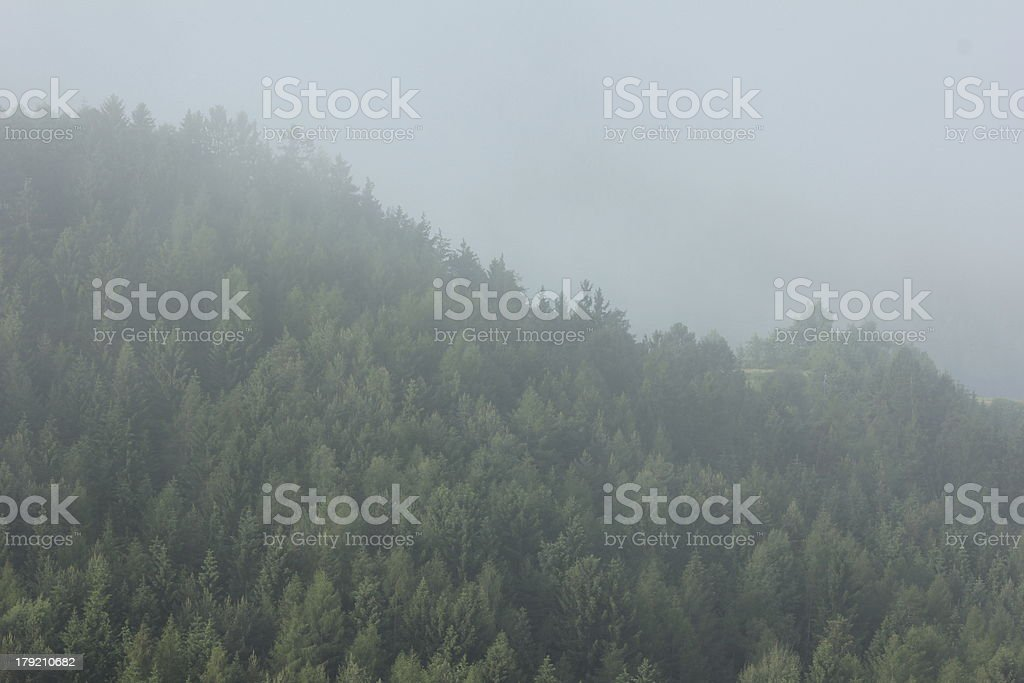 Mystery Forest in the Fog royalty-free stock photo
