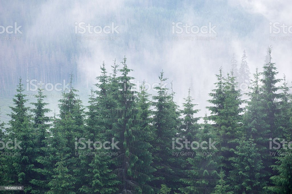 Mystery forest that leads to adventure royalty-free stock photo