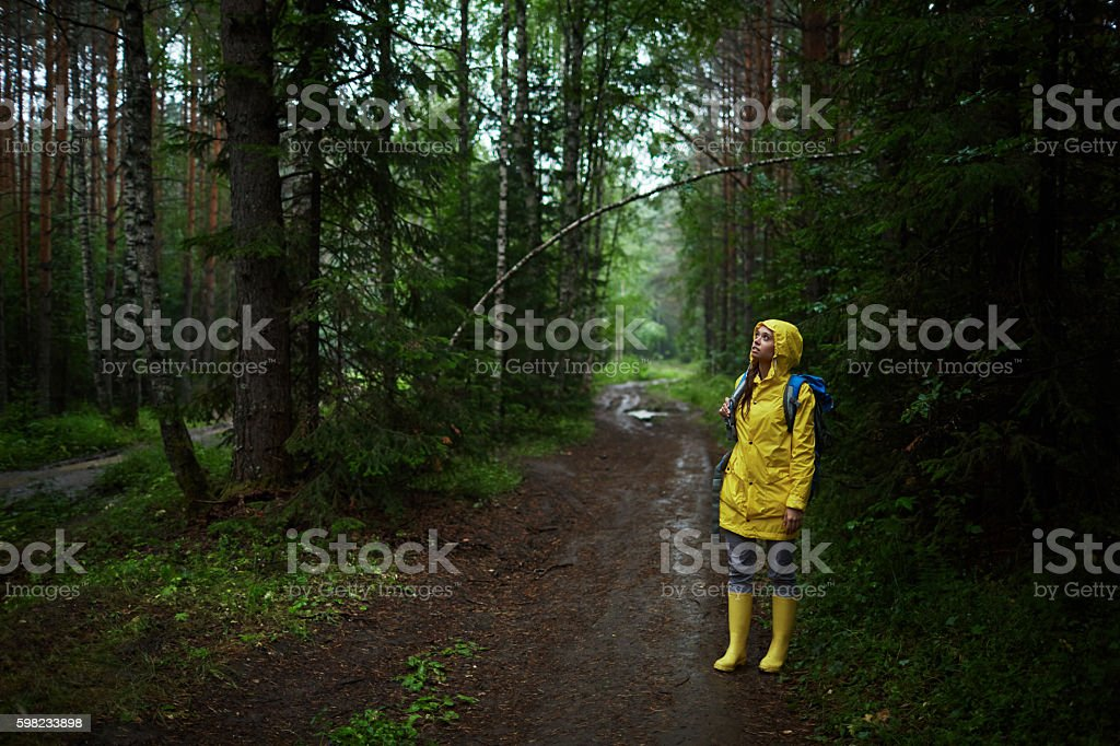 Mystery of forest foto royalty-free