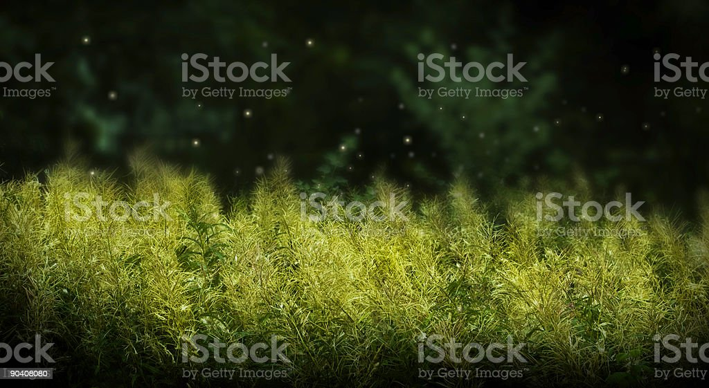 Mystic Field royalty-free stock photo