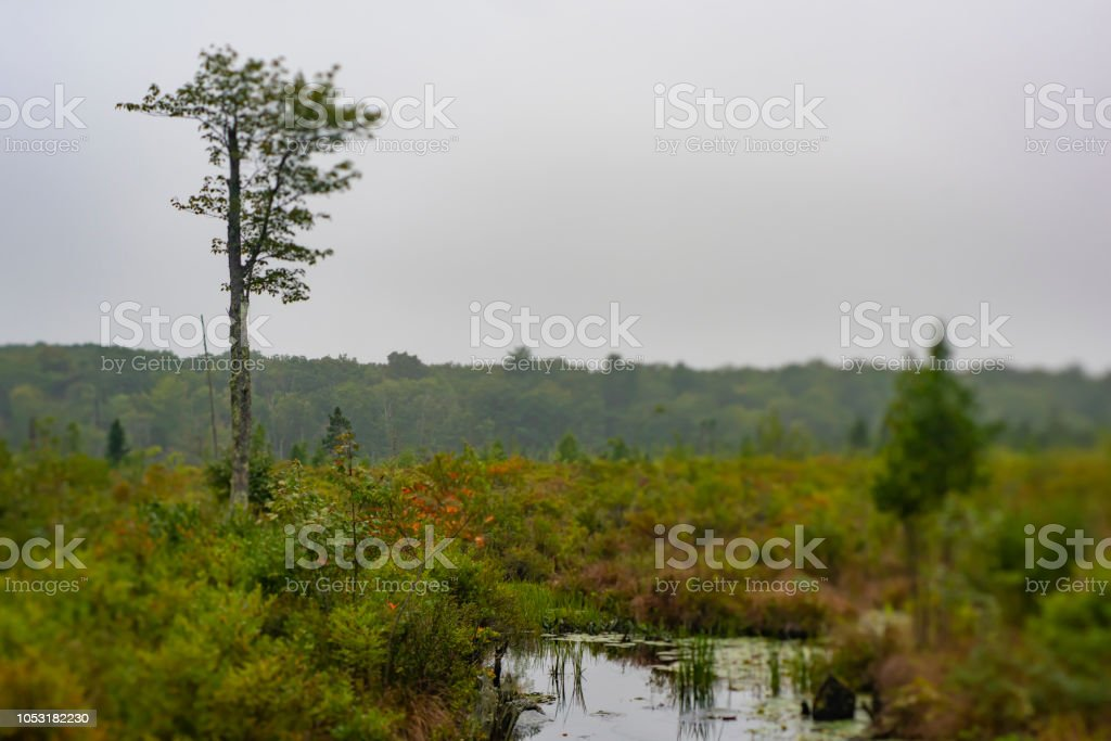 Mystic Forest on Swamp stock photo