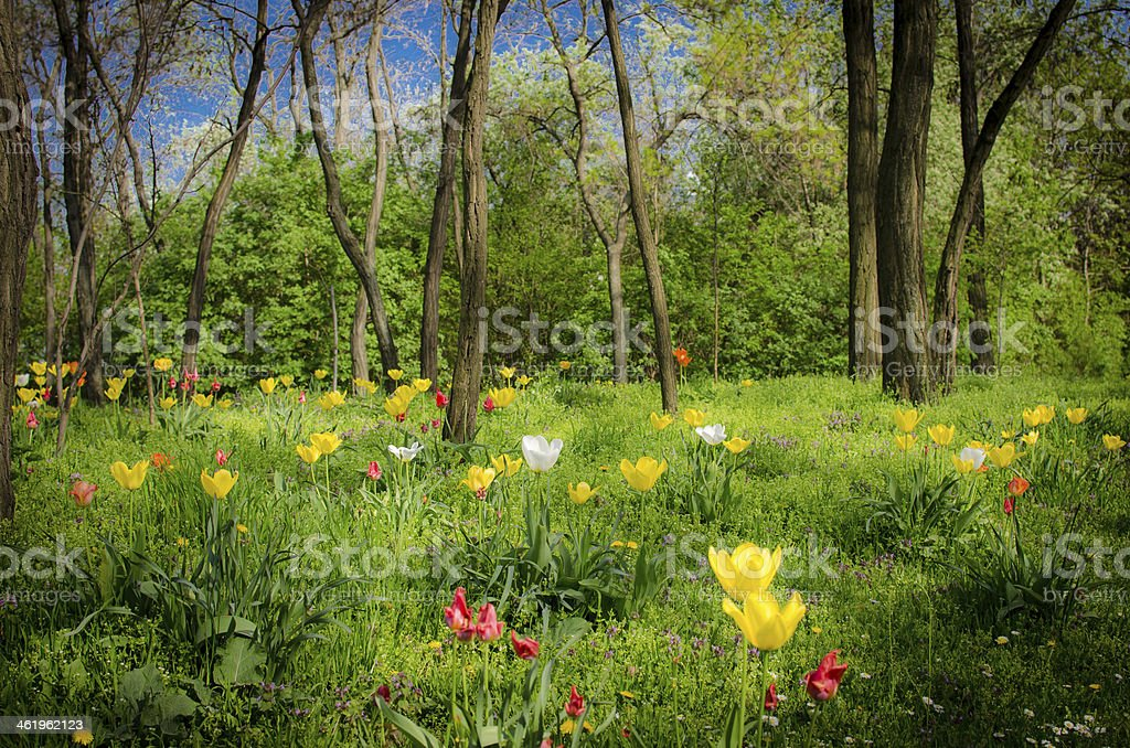 mystic forest with flowers stock photo