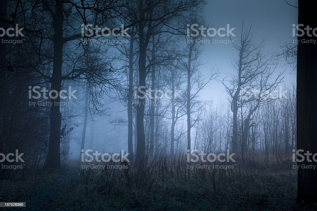 Mystic forest with fog in autumn stock photo