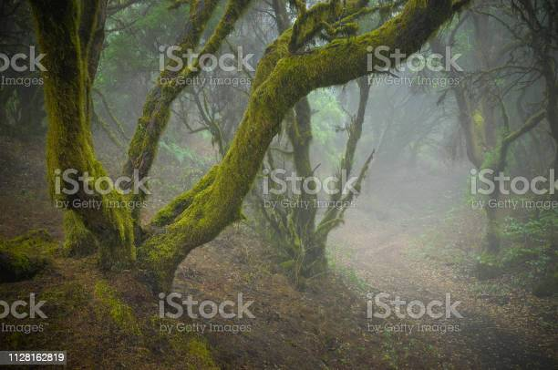 Photo of Mystic mood in the rainforest. Laurisilva forest on a Canary Island.