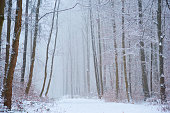 Road through the foggy forest in winter with snow.